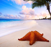Art beautiful landscape with Sea star on the beach — Stock Photo