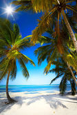 Art summer Untouched tropical beach — Stock Photo