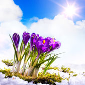 Art Spring Ground covered with thawing snow — Stock Photo