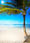 Art caribbean tropical sea beach — Stock Photo