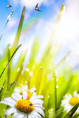 Abstract sunny beautiful Spring  background  — Stock Photo