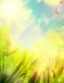 Abstracts of natural spring background — Stock Photo