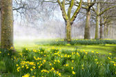 Art spring flowers in the  English park — Stock Photo