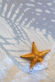 Art Sea star on the beach background — Stock Photo
