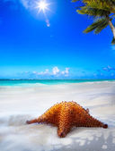 Art Beautiful sea  beach on a Caribbean island  — Stock Photo