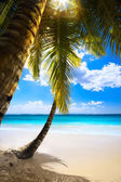 Art sunset on beach Caribbean island, seychelles — Foto Stock