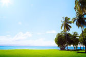 Art Coconut palm on tropical golf course grass and Caribbean sea — Stock Photo