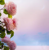 Art flowers roses romantic evening on Park Lake — Stock Photo