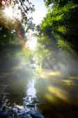 Art beautifu landscape with morning tropical River in jungle — Stock Photo
