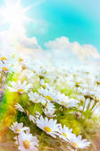Art high light Bright summer flowers Natural background — Stock Photo