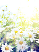 Art high light Bright summer flowers Natural background — 图库照片