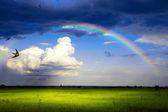 Art summer scene, panorama of nature after the rain  — Stock Photo
