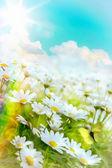 Art high light Bright summer flowers Natural background — Stock Photo