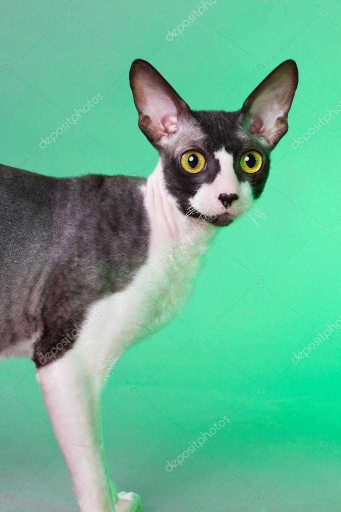 手机qq空间背景图片动物