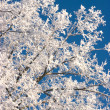 Stock Photo: Frosted branches