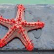 Red-knobbed starfish — Stock Photo