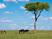African savanna — Stock Photo