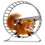 Fox in the wheel — Stock Photo