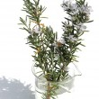 Sprig of rosemary in a beaker - Foto Stock