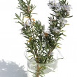 Sprig of rosemary in a beaker - Photo