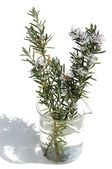 Sprig of rosemary in a beaker — Stok fotoğraf