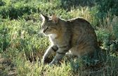 Kittygirl Stalking — Stockfoto
