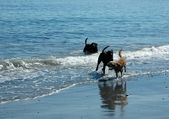 Dogs In The Surf — Stock Photo