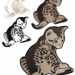 Tabby kitten with variations — Stock Vector