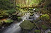 Brook with a wooden bridge — Stock Photo