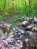 Baxters Hollow State Natural Area — Stock Photo