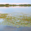 Shabbona Lake - Illinois. - Stock Photo