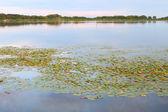 Shabbona Lake - Illinois. — Stock Photo