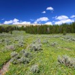 Bighorn National Forest Wyoming - Stock Photo