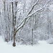 Winter Wonderland Northern Illinois - Stock Photo