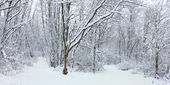 冬季仙境北伊利诺伊 — 图库照片