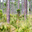 Stock Photo: Forest Scene Everglades