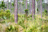 Forest Scene Everglades — Stock Photo