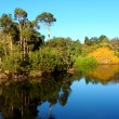 Stock Photo: Royal Botanic Gardens Melbourne