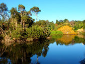 Royal Botanic Gardens Melbourne — Stock Photo