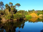 Royal Botanic Gardens Melbourne — Stock Photo