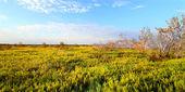 Kıyı kır manzarası everglades — Stok fotoğraf