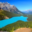 Peyto Lake of Canada — Stock Photo