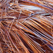 Dried Palm Fronds Background — Stock Photo