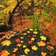 Beautiful Autumn Illinois Landscape — Stockfoto