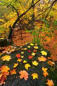 Beautiful Autumn Illinois Landscape — Stock Photo
