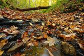 Forest Creek Northern Illinois — Stock Photo