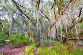 Spanish Moss Everglades National Park — Stock Photo