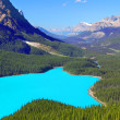 Peyto Lake Banff National Park — Stock Photo