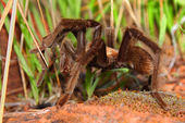 Tarantula Zion National Park — Stock Photo