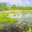Stock Photo: Volo Bog State Natural Area